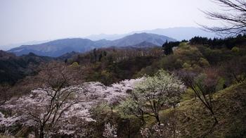 touringMyogiSakura03.jpg